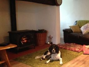 Dog Friendly Cottage Williton, Somerset | Pet Holidays